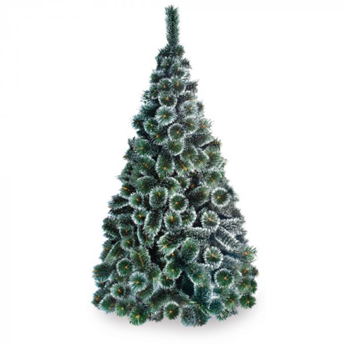 Жилкова елха бял връх 180 см