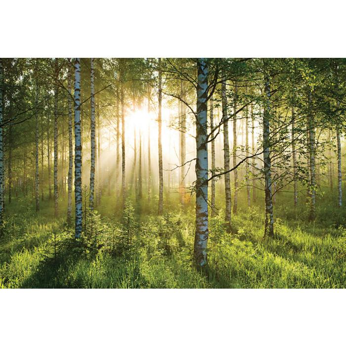 Фототапет forest-a003, 4 части на хартиена основа-315/232