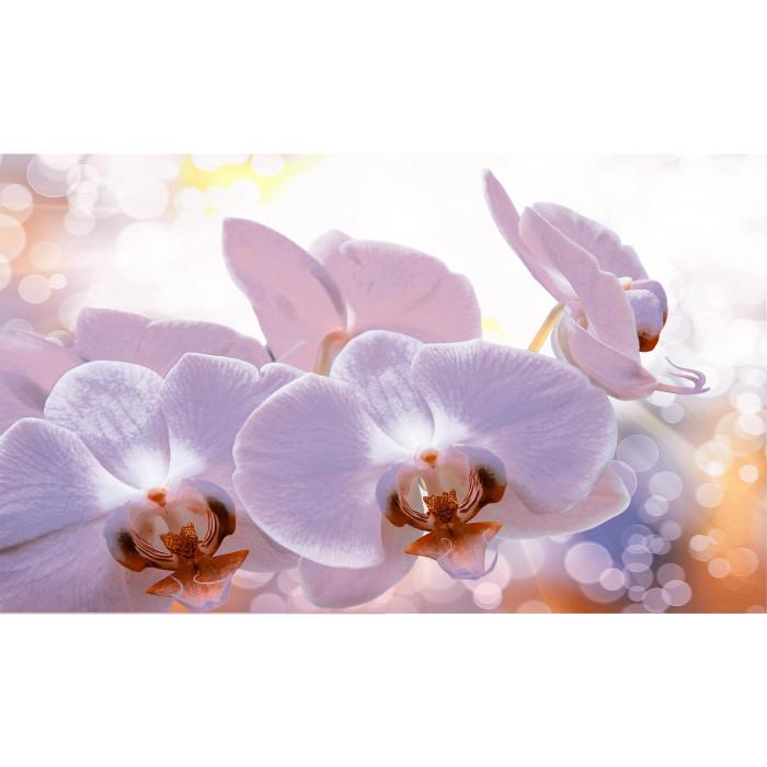 Плочки за стенна декорация комплект IJ 600 x 1000 Виола орхидея лилави
