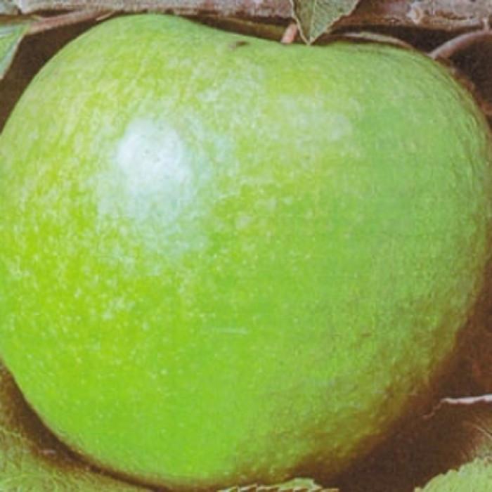 Ябълка - Грени Смит