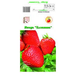 """Разсад ягоди """"Елсанта"""" 5 броя"""