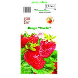"Разсад ягоди ""Селва"" 5 броя"