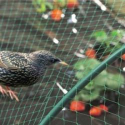 Мрежа срещу птици My Garden