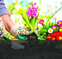 Растения,семена и торове