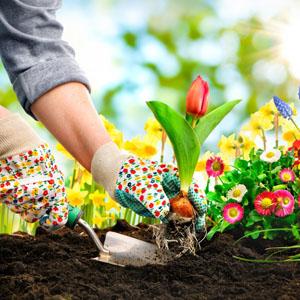 Растения,  семена и торове