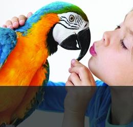 Грижи за птици
