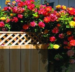 Външни и балконски растения